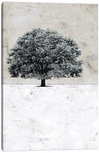 Old Black Tree Canvas Art Print