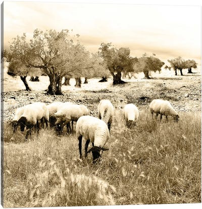 Out In The Fields Canvas Art Print