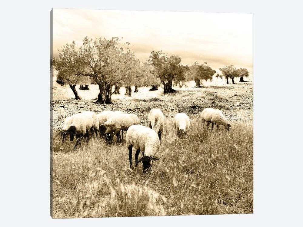 Out In The Fields by Ynon Mabat 1-piece Canvas Artwork