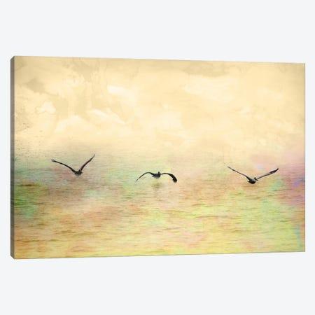 Seagulls In The Sky I Canvas Print #YBM60} by Ynon Mabat Canvas Art