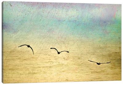 Seagulls In The Sky II Canvas Art Print
