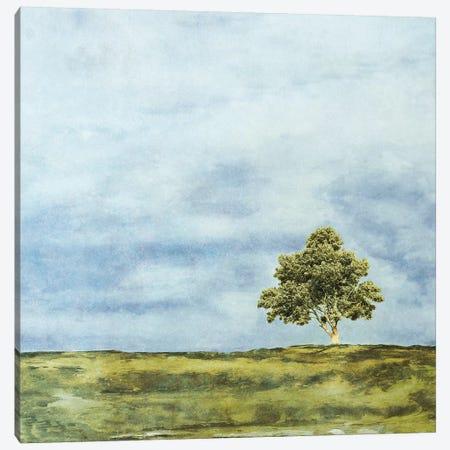 Summer Oak Canvas Print #YBM66} by Ynon Mabat Canvas Print