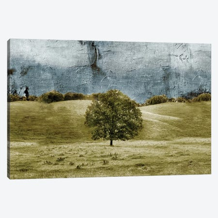 Tree In The Valley Canvas Print #YBM70} by Ynon Mabat Canvas Art Print