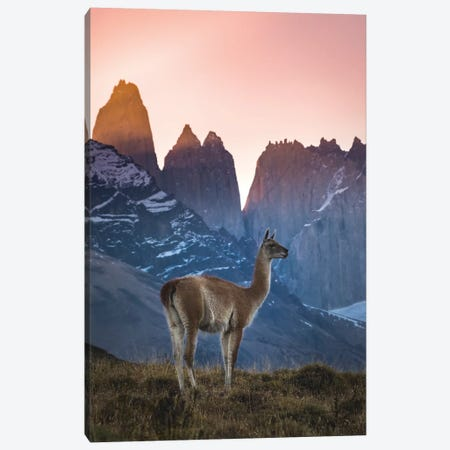 Chile, Torres Del Paine National Park. Guanaco In Front Of The Towers At Sunset. Canvas Print #YCH105} by Yuri Choufour Art Print