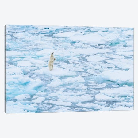 Norway, Svalbard, 82 Degrees North. Curious Polar Bear Taking A Stand. Canvas Print #YCH134} by Yuri Choufour Canvas Wall Art