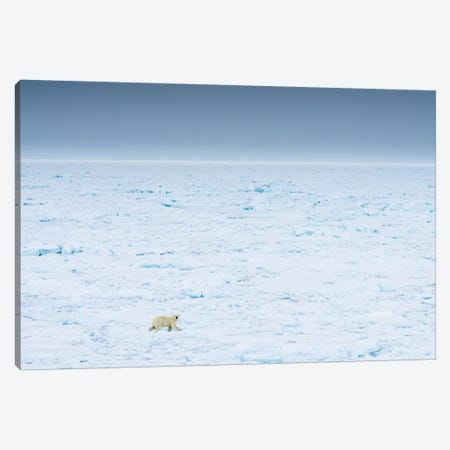 Norway, Svalbard, 82 Degrees North. Polar Bear Moves Across The Landscape. Canvas Print #YCH135} by Yuri Choufour Canvas Wall Art