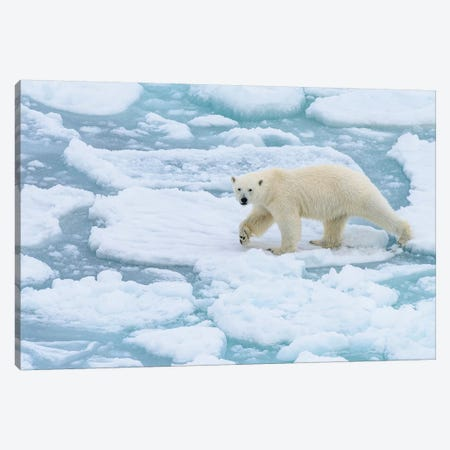 Norway, Svalbard, 82 Degrees North. Polar Bear On The Move. Canvas Print #YCH136} by Yuri Choufour Canvas Art