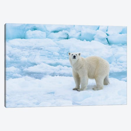 Norway, Svalbard. Sea Ice Edge, 82 Degrees North, Polar Bear Casting Curious Look. Canvas Print #YCH148} by Yuri Choufour Canvas Art