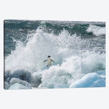 Antarctica, Antarctic Peninsula, Brown Bluff Adelie Penguin, Crashing Wave. Canvas Print #YCH15} by Yuri Choufour Canvas Wall Art