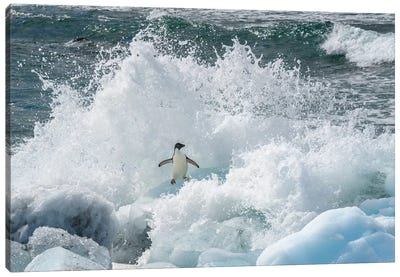 Antarctica, Antarctic Peninsula, Brown Bluff Adelie Penguin, Crashing Wave. Canvas Art Print