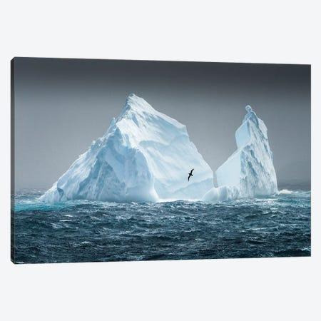South Georgia Island. Albatross Flying Past Pinnacled Iceberg. Canvas Print #YCH165} by Yuri Choufour Canvas Art Print