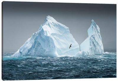 South Georgia Island. Albatross Flying Past Pinnacled Iceberg. Canvas Art Print