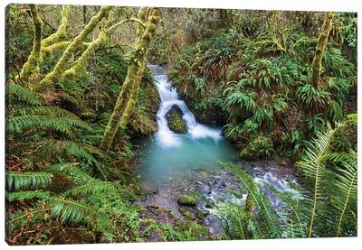 Usa, California, Redwoods National Park. Stream Flows Through Canopy And Ferns Onto Enderts Beach. Canvas Art Print