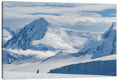 Antarctic Peninsula, Antarctica, Damoy Point. Gentoo Penguin, Mountain Landscape. Canvas Art Print