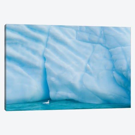 Antarctica, Antarctic Peninsula, Wilhelmina Bay With Iceberg, Glacial Ice And Snow Petrel. Canvas Print #YCH26} by Yuri Choufour Art Print