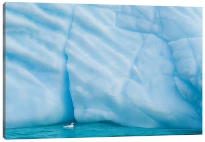 Antarctica, Antarctic Peninsula, Wilhelmina Bay With Iceberg, Glacial Ice And Snow Petrel. Canvas Art Print