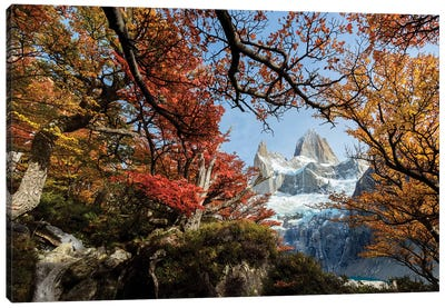 Argentina, Los Glaciares National Park. Mt. Fitz Roy Through Window Of Lenga Beech Trees In Fall. Canvas Art Print