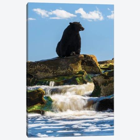 Canada, British Columbia. Black Bear Waiting For Salmon. Canvas Print #YCH74} by Yuri Choufour Canvas Art