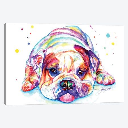 English Bulldog Lying Down Canvas Print #YGM23} by Yubis Guzman Canvas Art