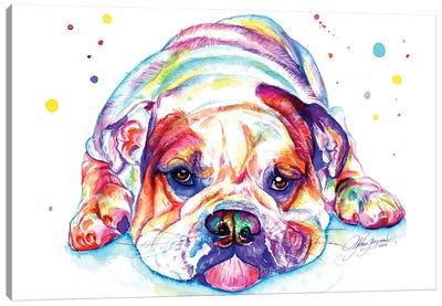 English Bulldog Lying Down Canvas Art Print