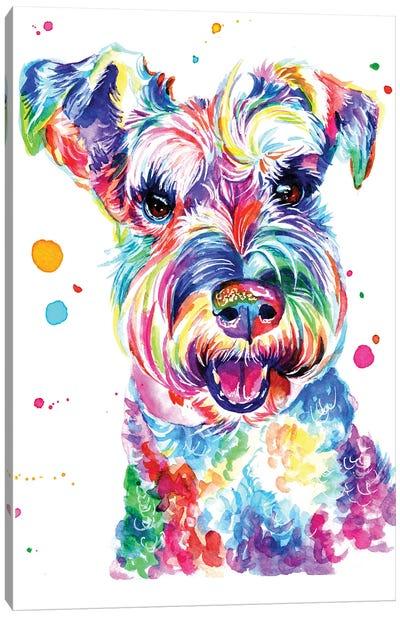 Smiling Schnauzer Canvas Art Print
