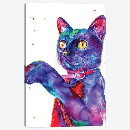 Blue Cat Canvas Print #YGM33} by Yubis Guzman Canvas Art Print