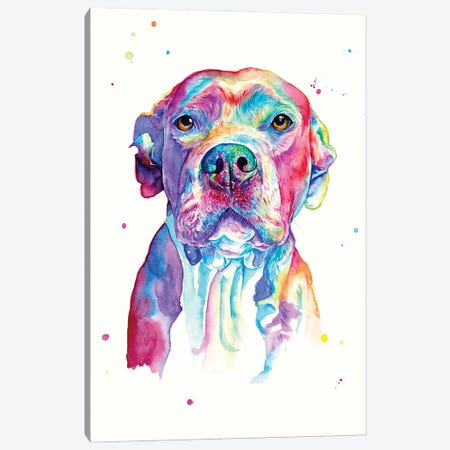 Pitbull Canvas Print #YGM47} by Yubis Guzman Canvas Art Print