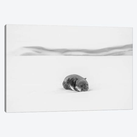 Lonely Canvas Print #YJI1} by Yi Jiang Canvas Print