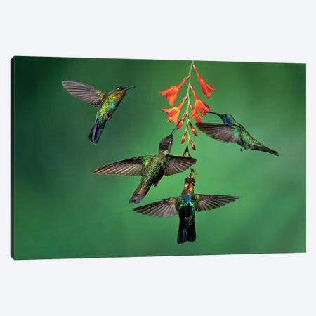 Happy Hour Canvas Print #YOF1} by Young Feng Canvas Print