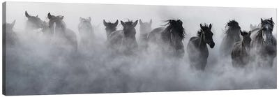 Mustangs Canvas Art Print