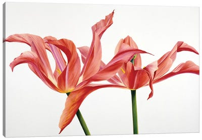 Dancing Floriade Canvas Art Print