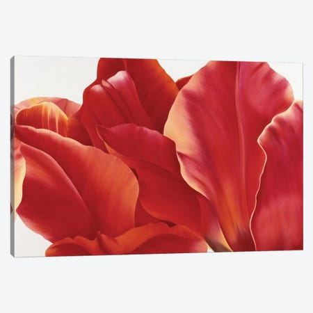 Fancy Flower I Canvas Print #YPH14} by Yvonne Poelstra-Holzhaus Art Print