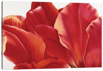 Fancy Flower I Canvas Art Print