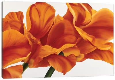 Fancy Flower II Canvas Art Print