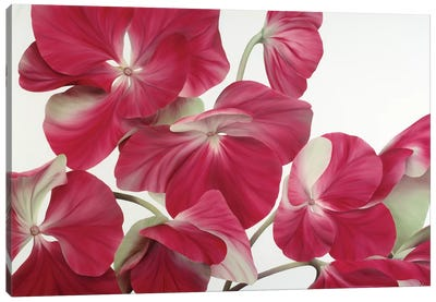 Floriade IV Canvas Art Print