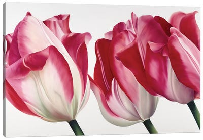 Floriade V Canvas Art Print