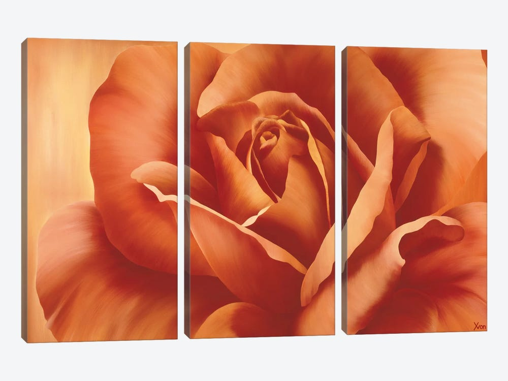 Full In Bloom I by Yvonne Poelstra-Holzhaus 3-piece Canvas Art