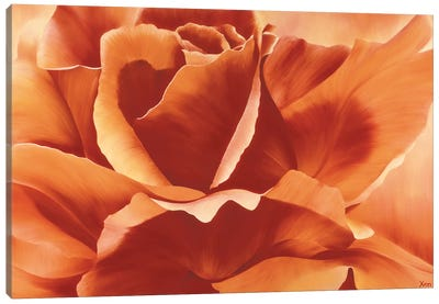 Full In Bloom II Canvas Art Print