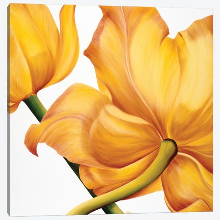 King Yellow Canvas Print #YPH25} by Yvonne Poelstra-Holzhaus Canvas Artwork
