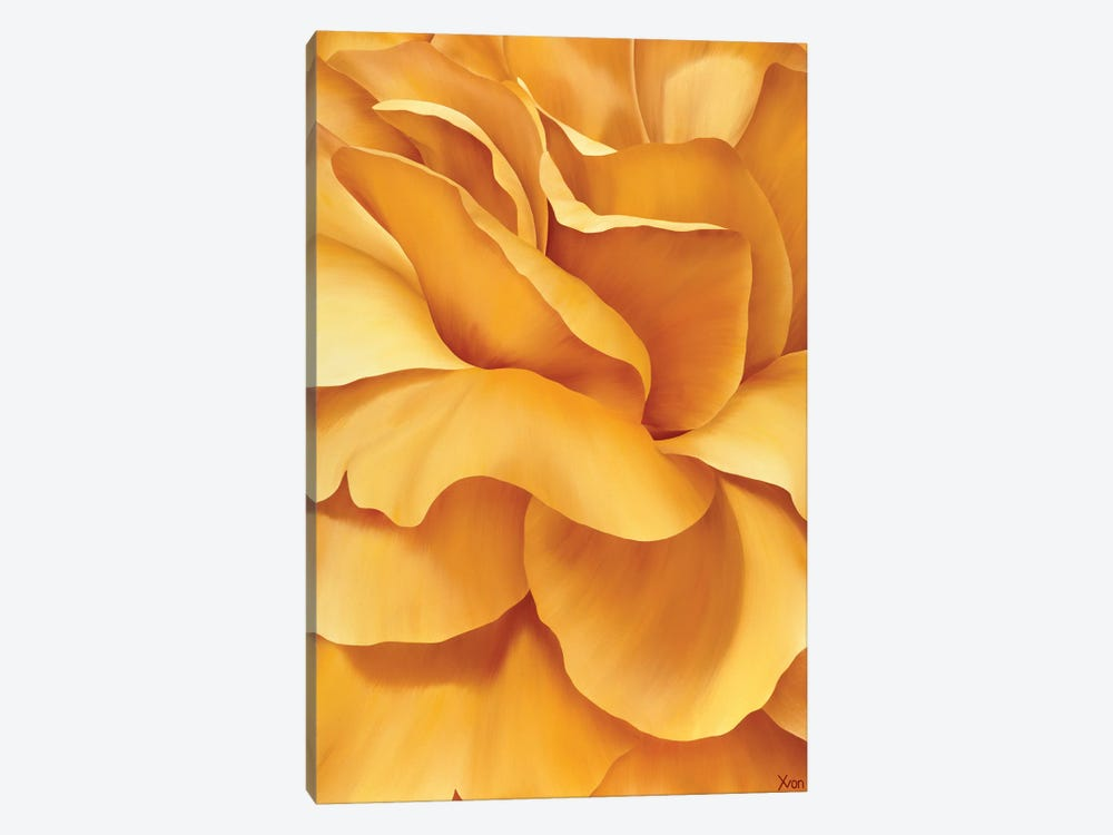 Magnificent Flower I by Yvonne Poelstra-Holzhaus 1-piece Canvas Wall Art
