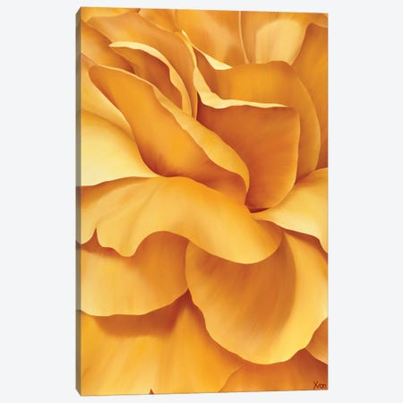 Magnificent Flower I Canvas Print #YPH27} by Yvonne Poelstra-Holzhaus Canvas Wall Art
