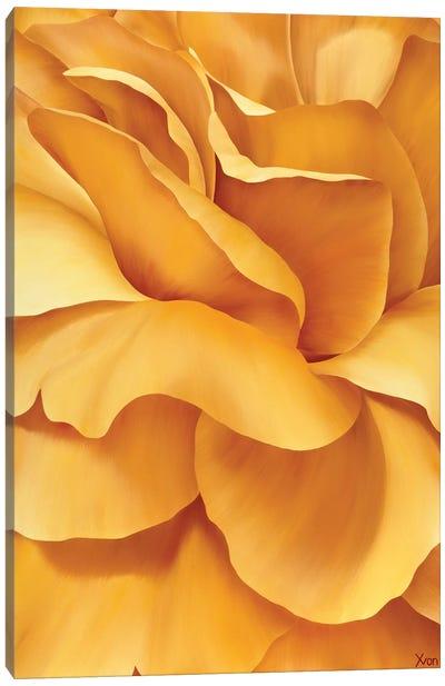 Magnificent Flower I Canvas Art Print