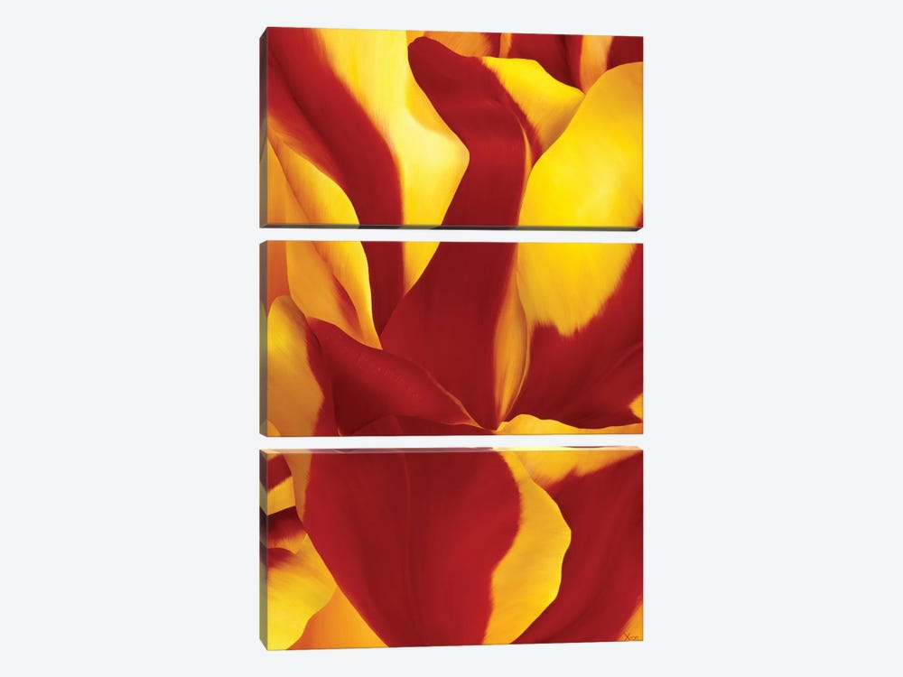 Magnificent Flower II by Yvonne Poelstra-Holzhaus 3-piece Canvas Print