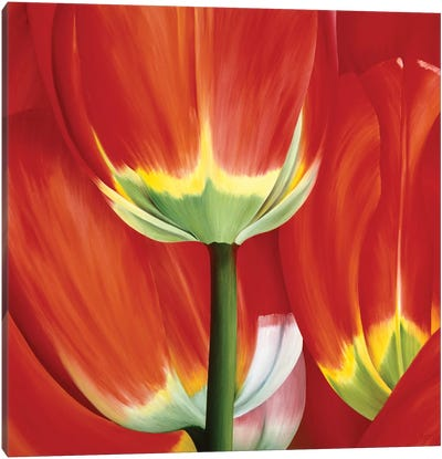 Most Beautiful Tulip I Canvas Art Print