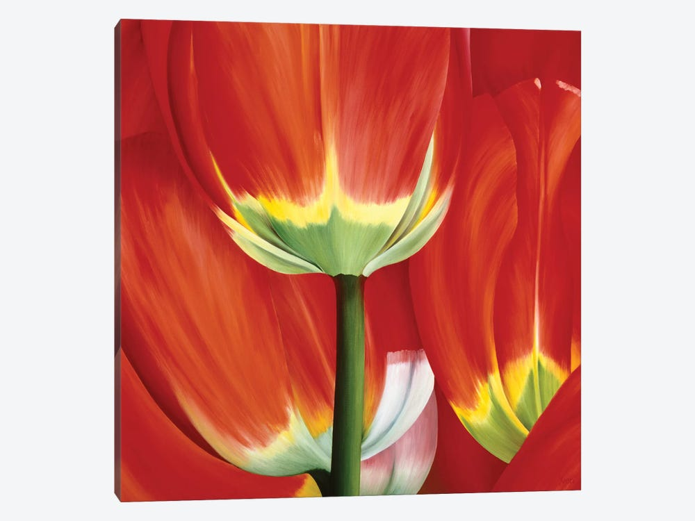 Most Beautiful Tulip I by Yvonne Poelstra-Holzhaus 1-piece Canvas Art Print