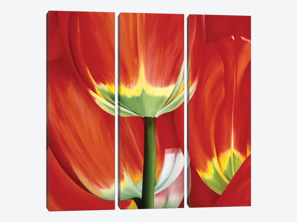 Most Beautiful Tulip I by Yvonne Poelstra-Holzhaus 3-piece Canvas Art Print