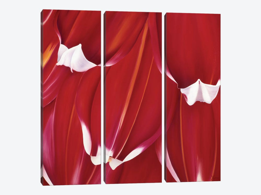 Most Beautiful Tulip II by Yvonne Poelstra-Holzhaus 3-piece Canvas Wall Art