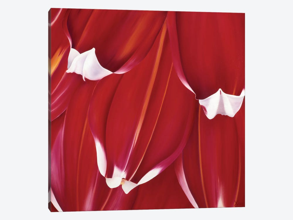 Most Beautiful Tulip II by Yvonne Poelstra-Holzhaus 1-piece Canvas Artwork