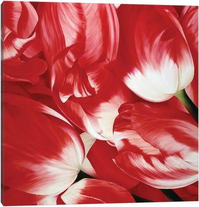 Most Beautiful Tulip III Canvas Art Print