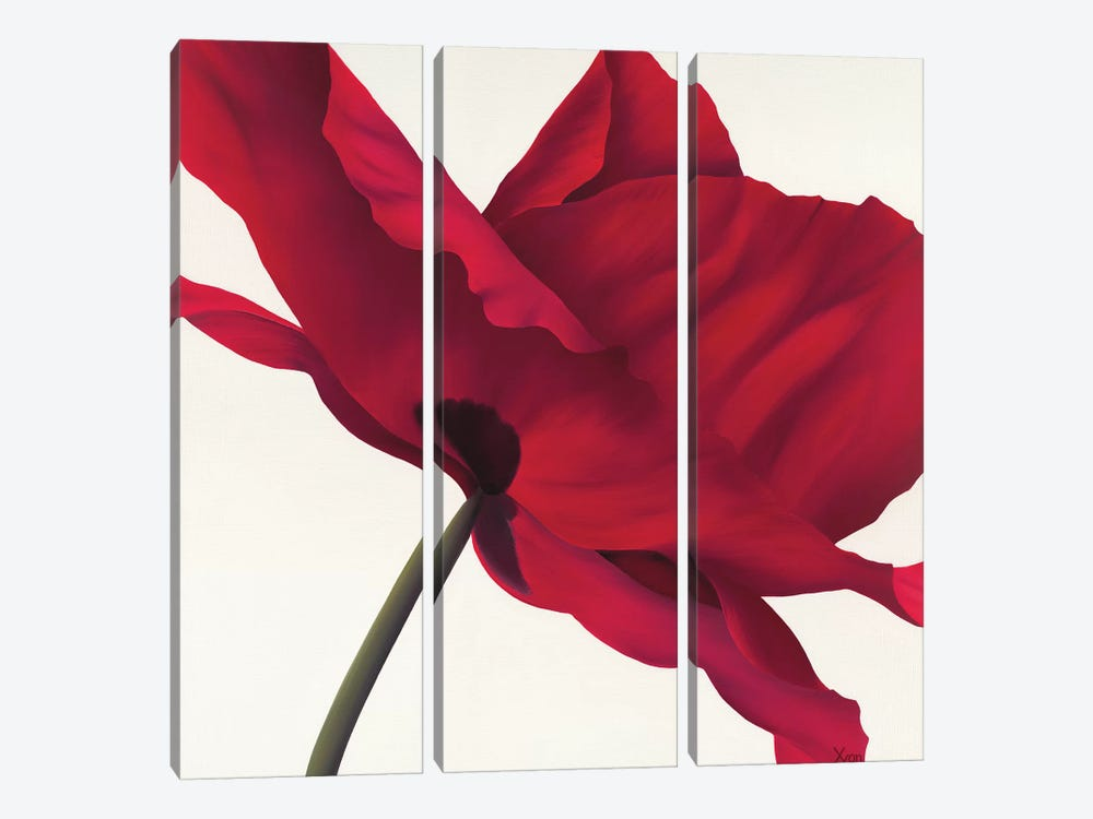 Papaver I by Yvonne Poelstra-Holzhaus 3-piece Canvas Art